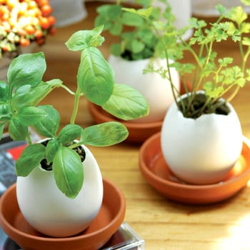 Garden Therapy:  Egglings