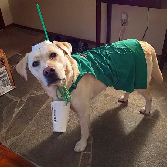 Dogs in Starbucks Costumes