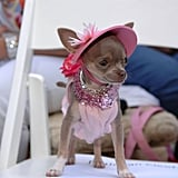 Easter Beagle: Canine Couture in Palm Beach, FL