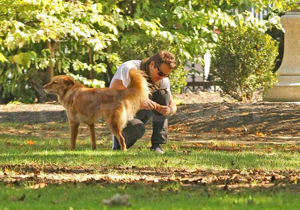 Ryan Reynolds with his dog at a Boston park.