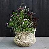 Barnacle Lotus Pot