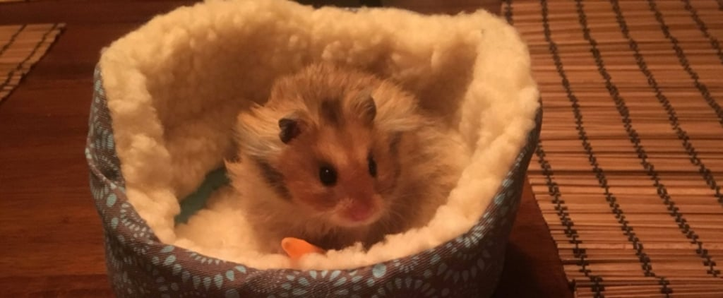 Girl Buys Tiny Bed For Her Hamster