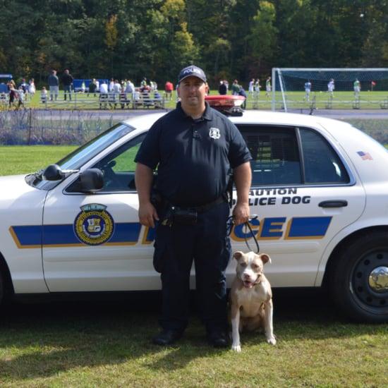 Police Pit Bull