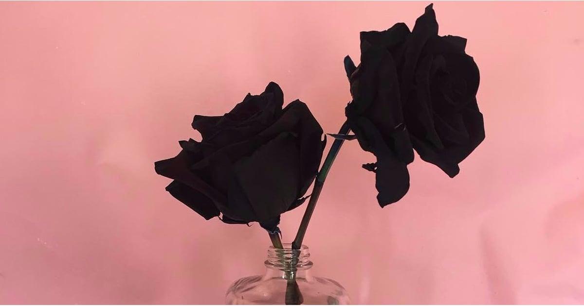 Can You Grow Black Roses Popsugar Home