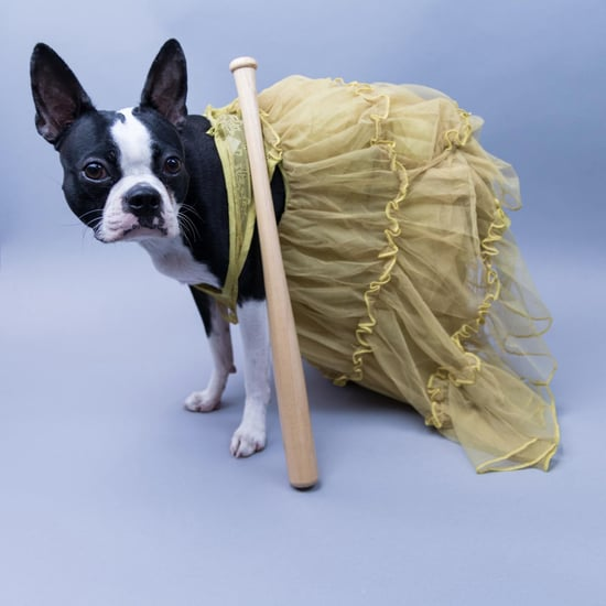 Pop-Culture-Inspired Halloween Costumes For Dogs