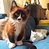 This Cat/Fox/Panda Hybrid