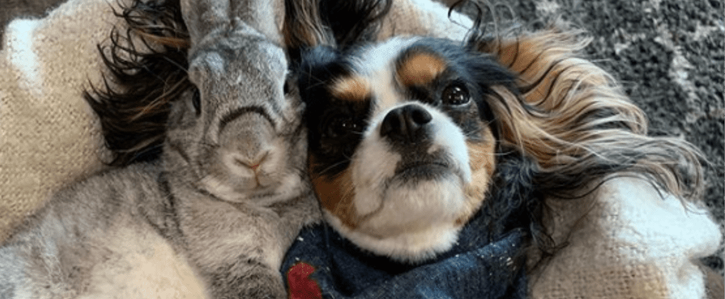 Photos and Videos of Dog and Bunny