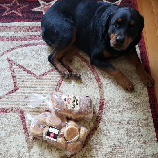 Dog Guards Family's Bread When They Leave the House