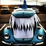 Shark Trunk