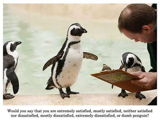 Cute Alert: Penguin Survey