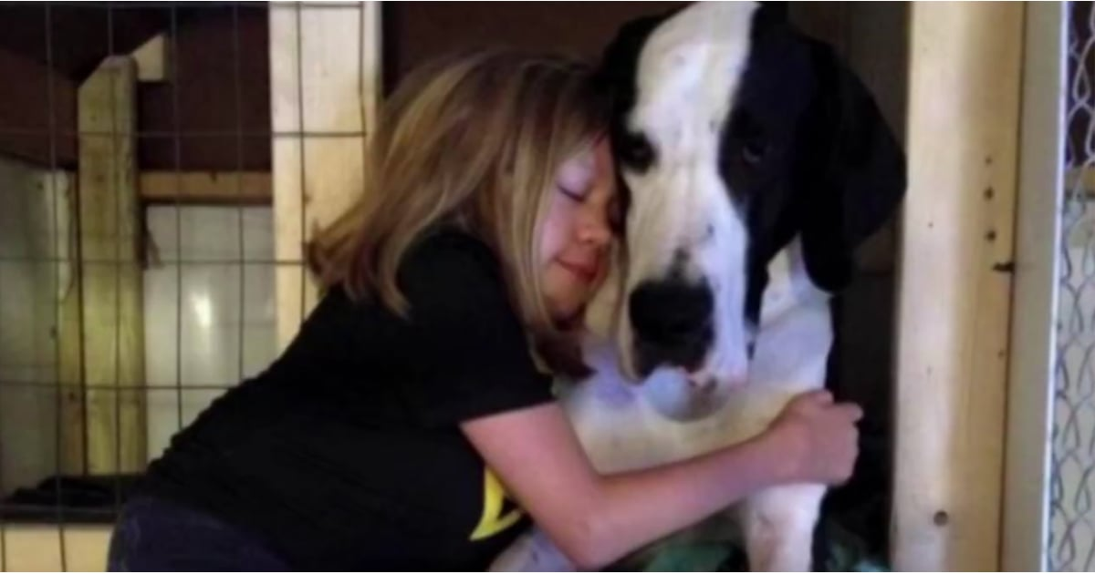 Girl Knotted By Great Dane