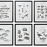 Uttermost 8-Pc. Science Studies Wall Art ($285)