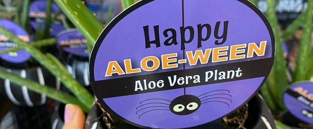 "Trader Joe's Has ""Happy Aloe-Ween"" Plants For Halloween"