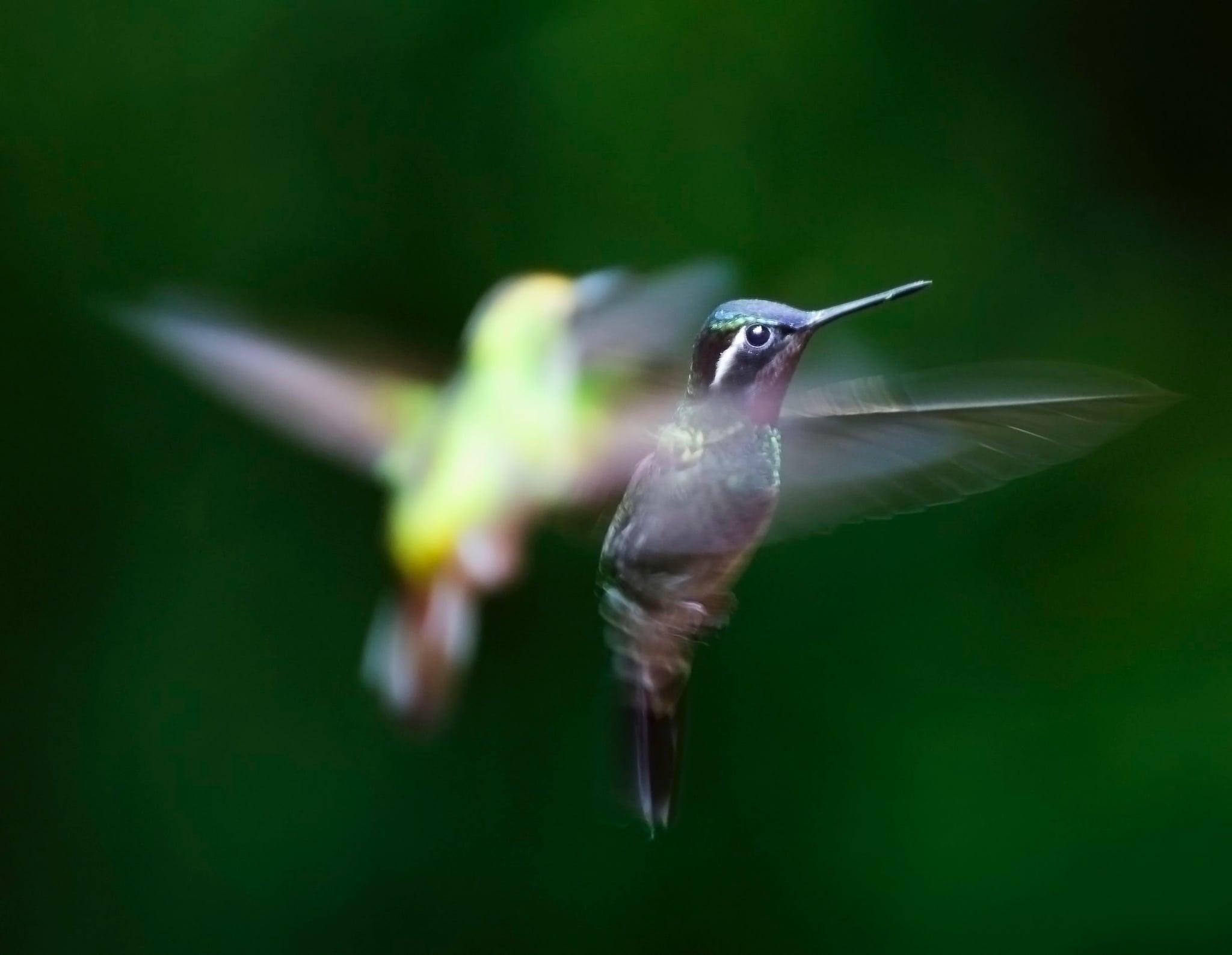 Hummingbird food recipe popsugar home simple hummingbird nectar recipe forumfinder Gallery