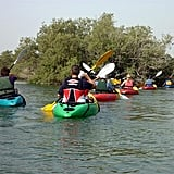 Kayak in Abu Dhabi's Eastern Mangroves