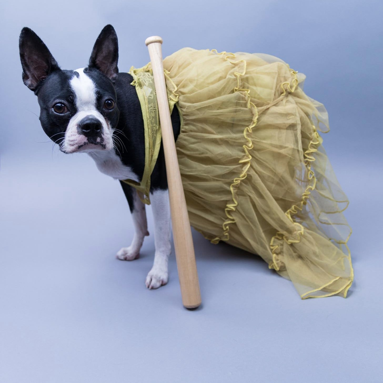pop-culture-inspired halloween costumes for dogs | popsugar pets
