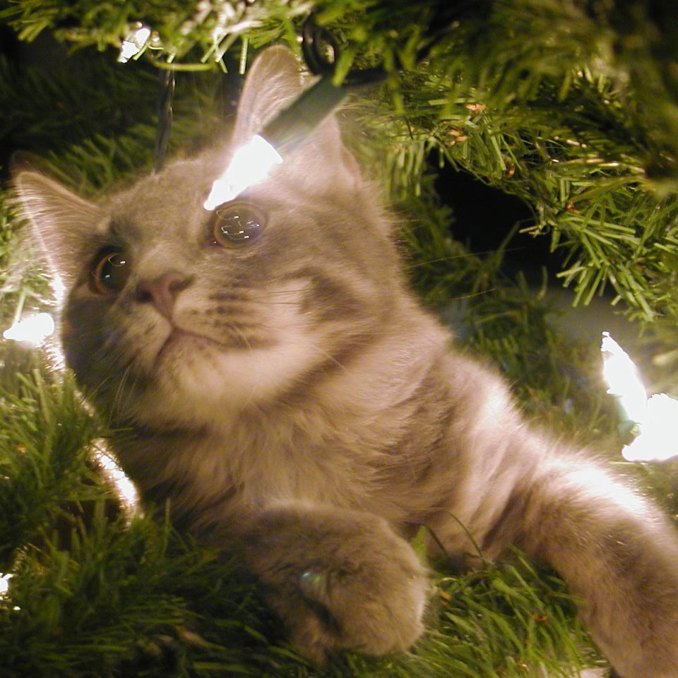 Keep Cat Away From Christmas Tree: Cute Pictures Of Pets Stuck In Christmas Trees