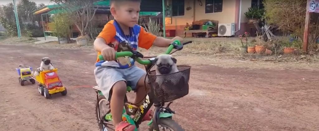 Boy Drives Puppies Around on His Bike