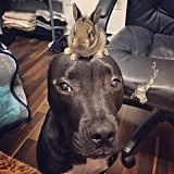 This confused dog with a bunny on its head