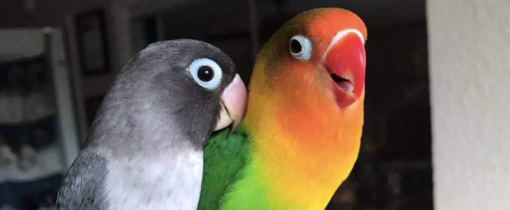 These 2 Actual Lovebirds Are the Relationship Goals You Never Knew You Needed