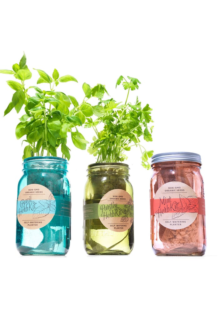 Modern Sprout Kitchen Herb Kit