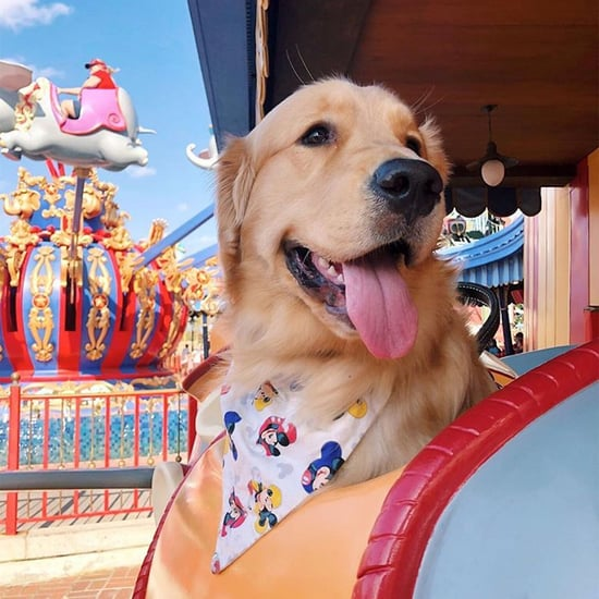 Cute Photos of Service Dogs at Disney Parks