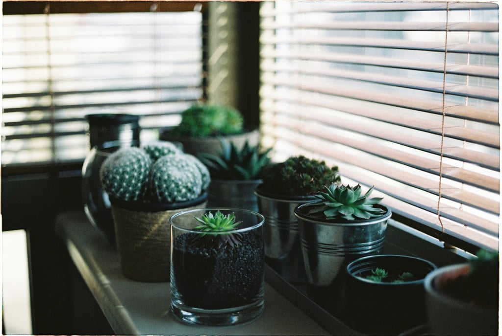 Open Your Windows (and Get a Few Plants)