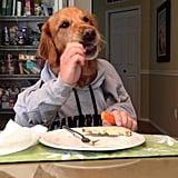 بينما يتناول هذا الكلب وجبة خفيفة مكوّنة من بعض الجزر مرتدياً سترة رياضيّة.