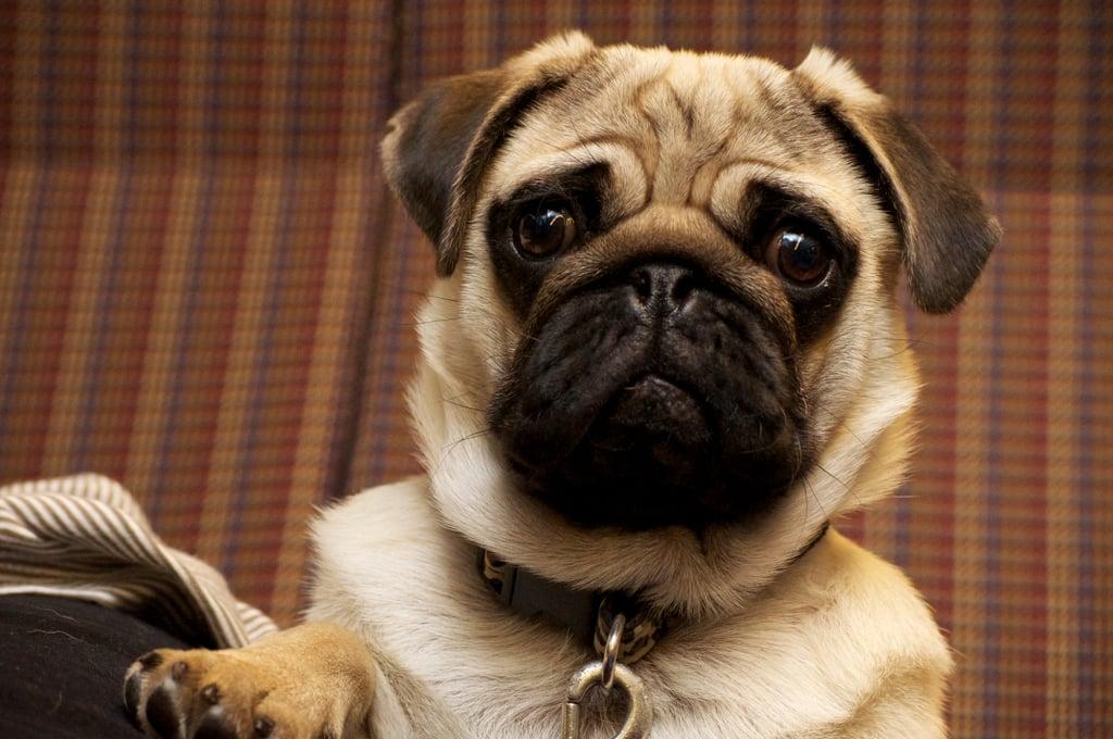 cute dog gifs popsugar pets