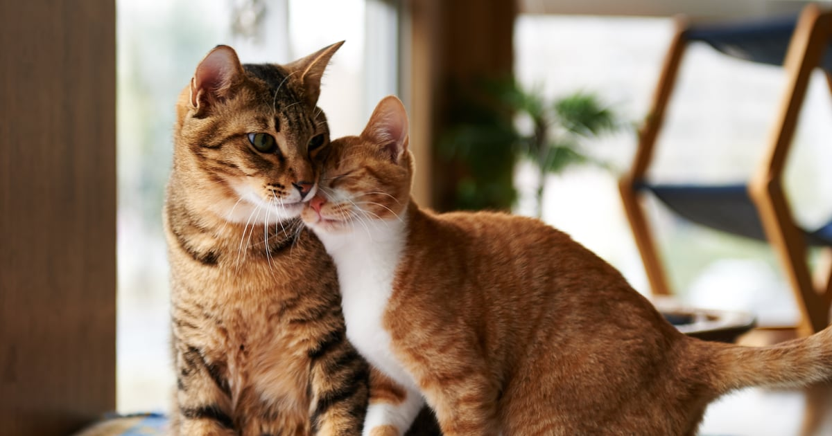 It Takes A Long Time for Cats to Become Friends — Here's What Experts Say