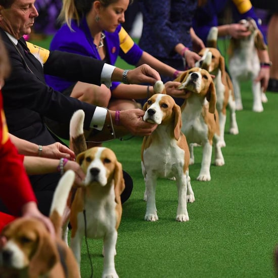 Photos From The Westminster Kennel Club