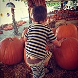 Sparrow Madden put a lot of effort into picking out his pumpkin. Source: Instagram user joelmadden