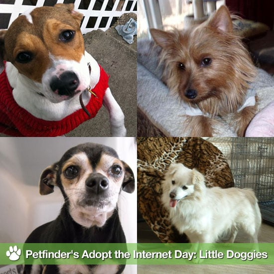 Pictures of Cute Small Dogs to Adopt