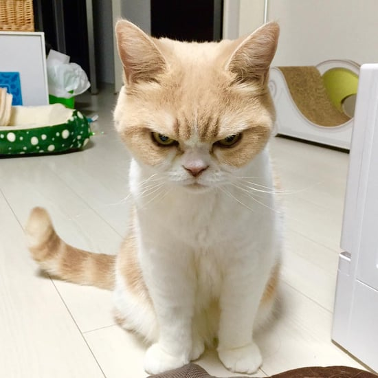 Koyuki, the Japanese Grumpy Cat