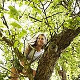 Climb a tree.