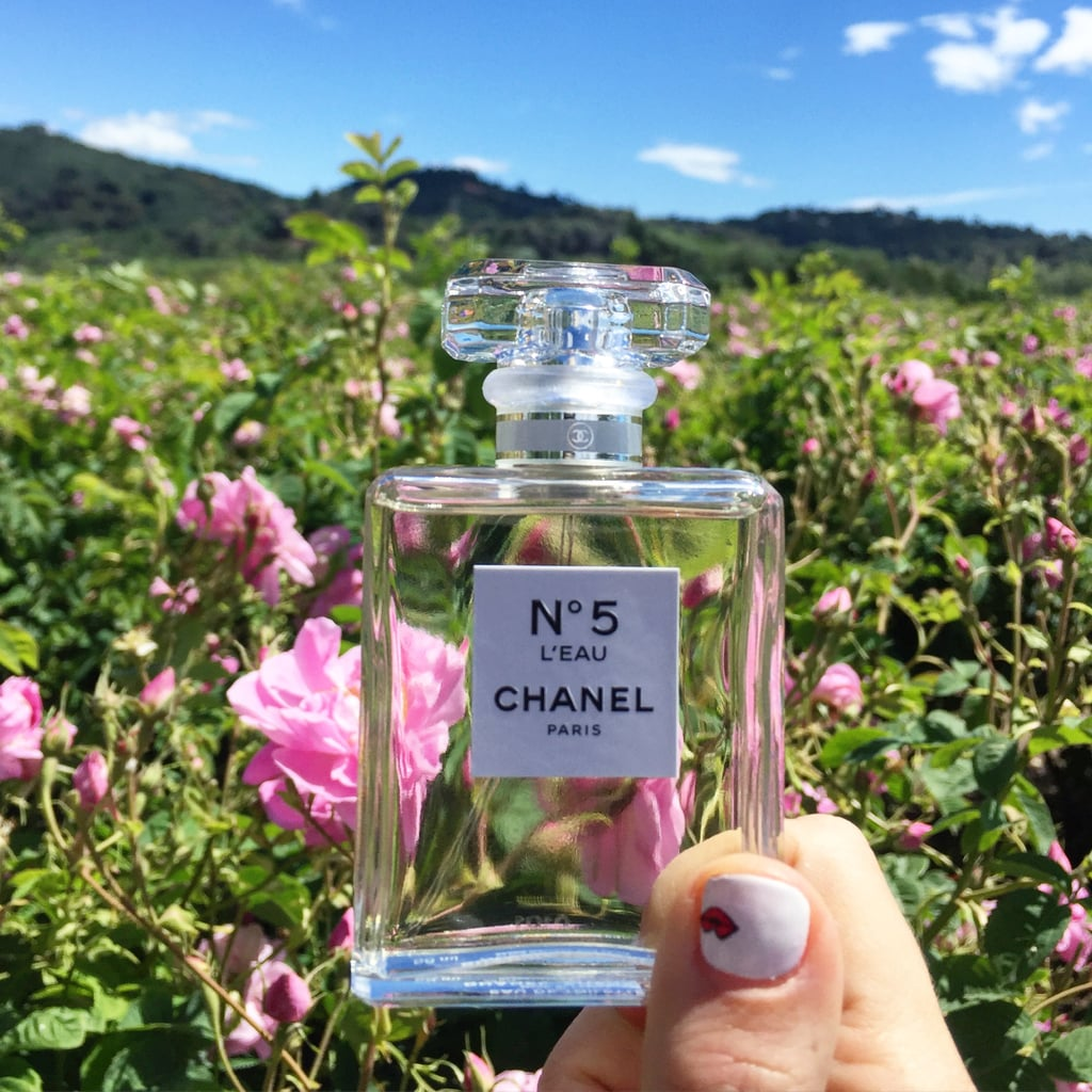 Image result for chanel No 5 roses fields