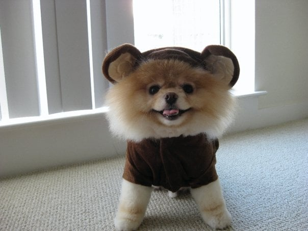 Bear, Toy, or Dog?
