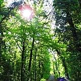 Forest in Reinach - BL - Switzerland