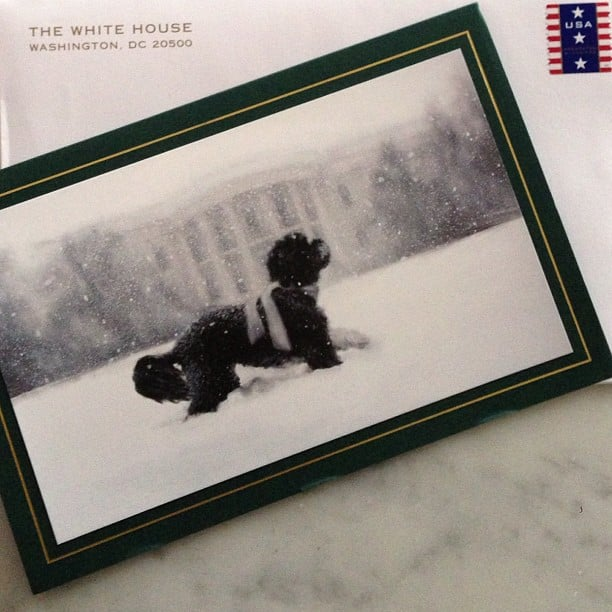 Jimmy Fallon shared a snap of Bo Obama on the cover of this year's Source: Instagram user jimmyfallon  White House Christmas card.
