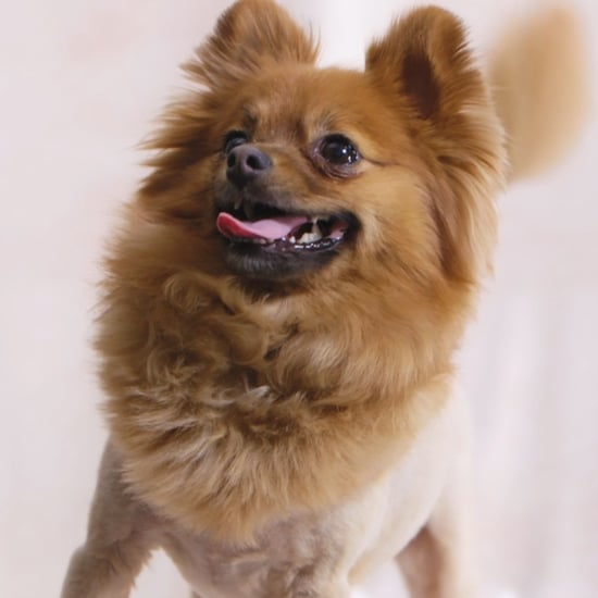 Puppy Blowouts Video