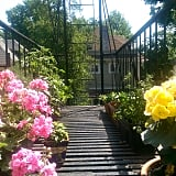 Treat your fire escape garden the way you would any other garden!