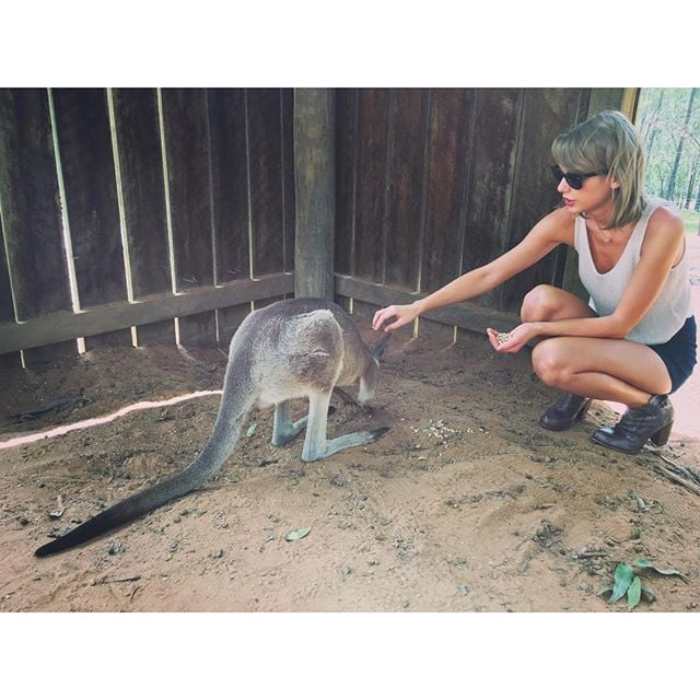 Taylor Swift's Instagram Pictures With Kangaroos 2015