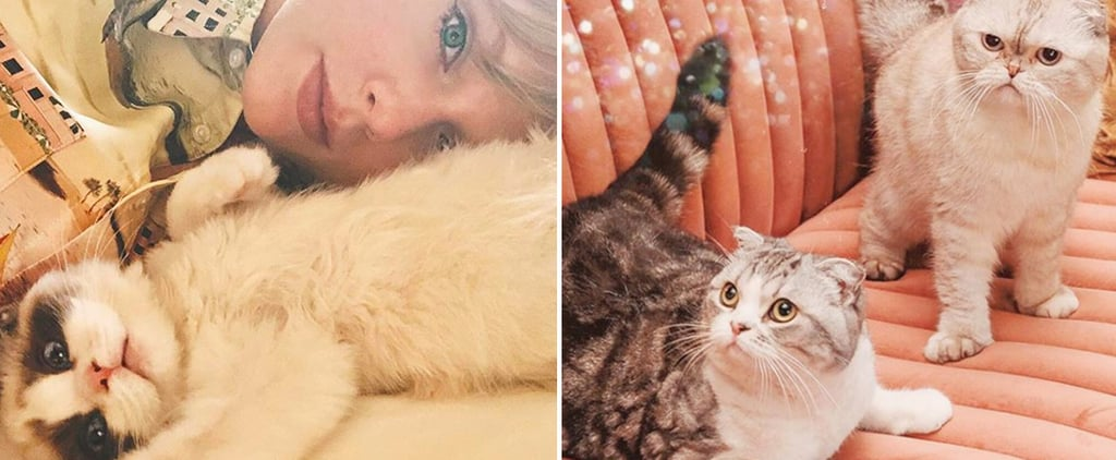How Many Cats Does Taylor Swift Have?