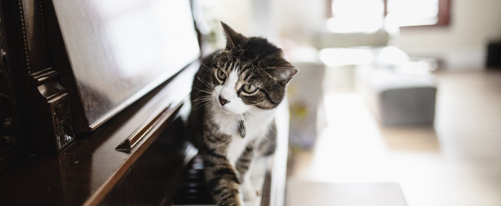 Why Does My Cat Become Active At Night?