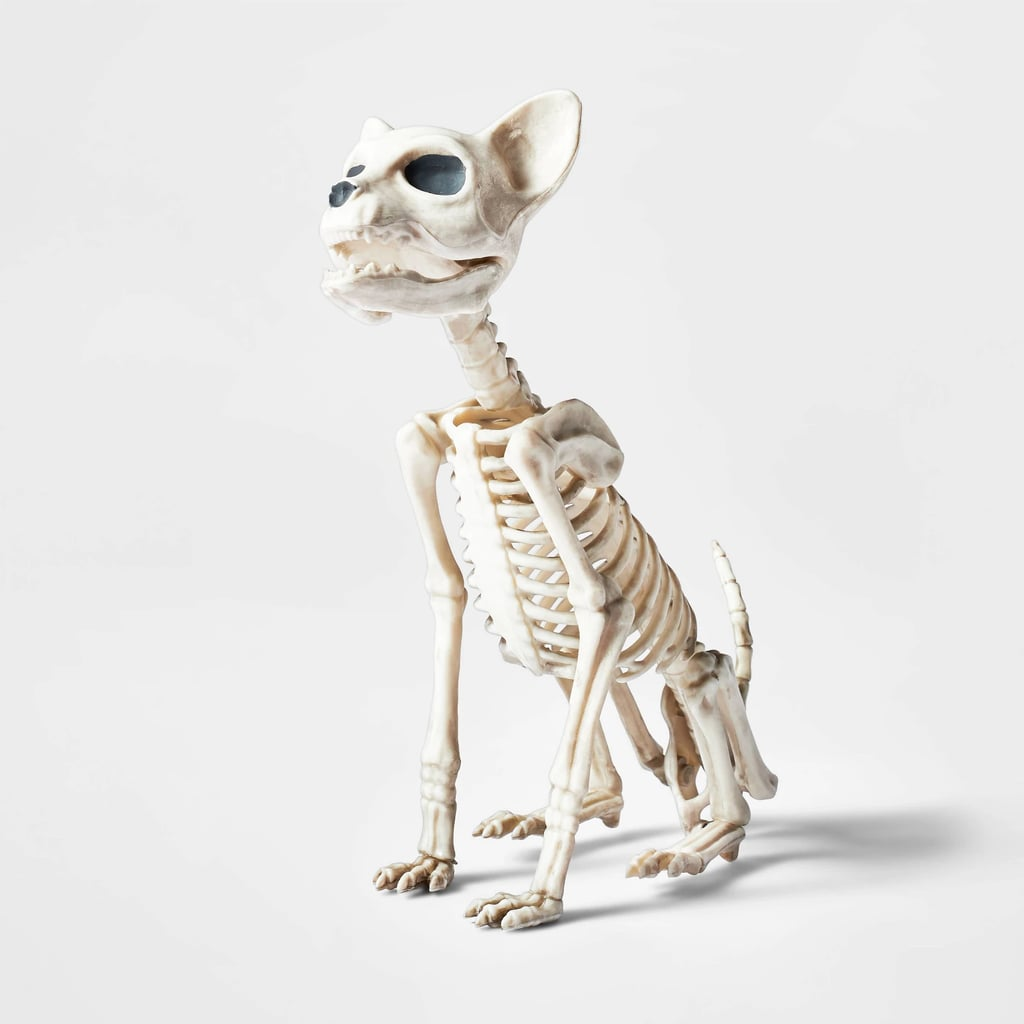 Small Sitting Kitten Skeleton