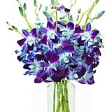 Exotic Sapphire Orchid Bouquet
