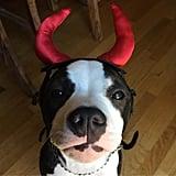 A Lil Devil