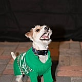 Dogs in Ugly Christmas Sweaters