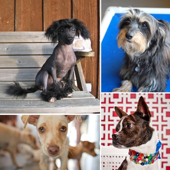 Small Dogs Available For Adoption