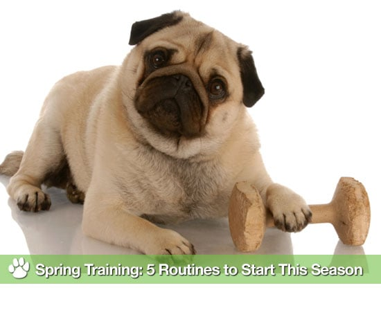 Things to Do With Dogs in Spring